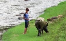 A boy and his buffalo.