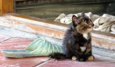 A smaller kitten I've not seen.